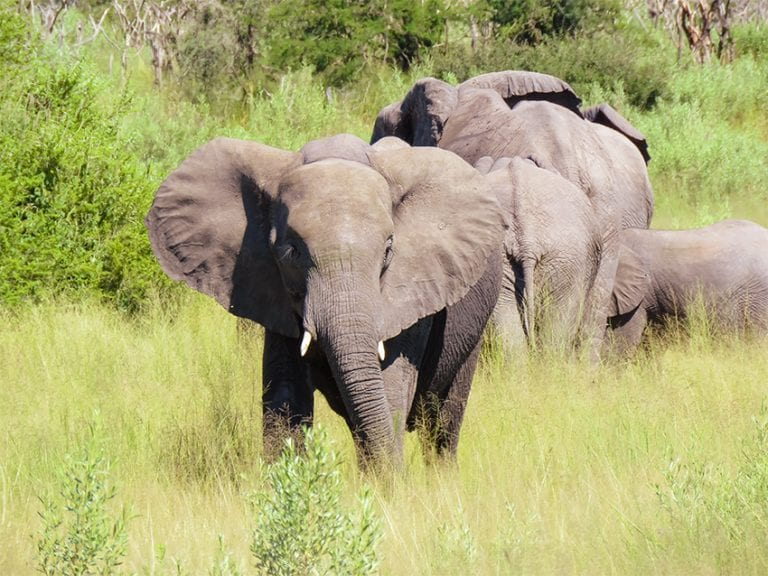 Face to face with elephants on our way to Rra Dinare