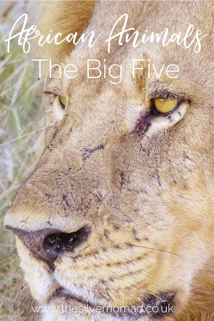 All the Fives - Africa's Big, Ugly, Little, Shy and downright Impossible Animals