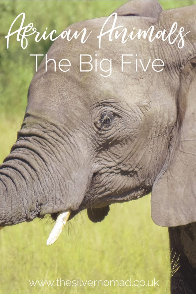 African Animals the big five