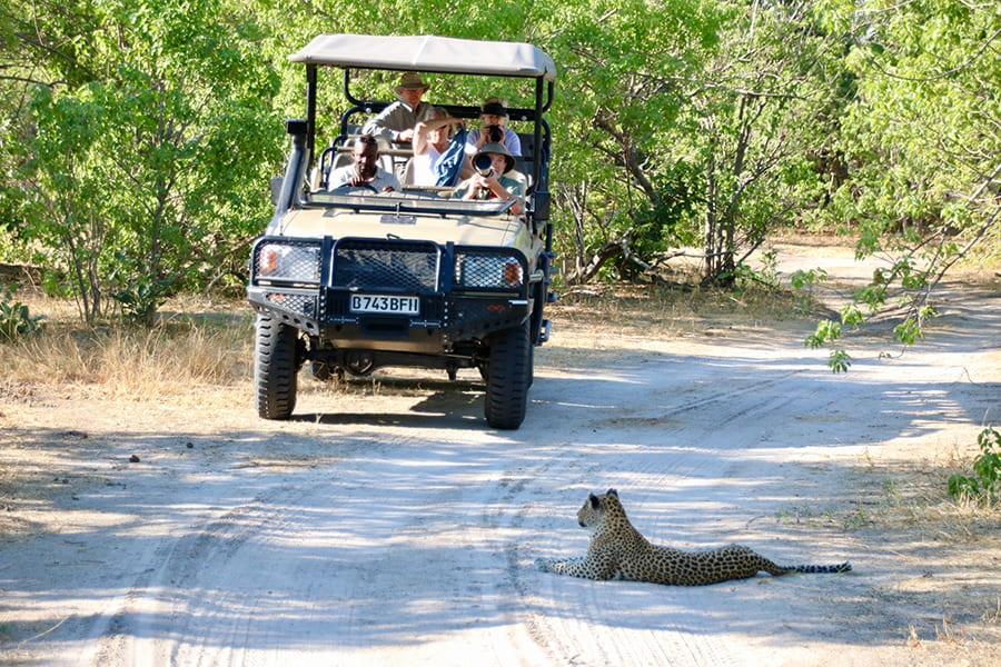 Safari jeep with five people in it on a sandy path surrounded by green bushes. A leopard is lying in the road