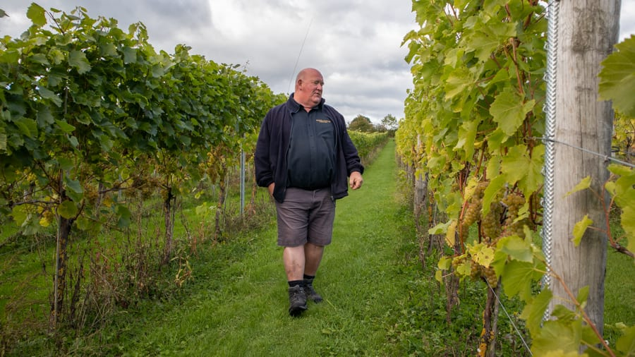 Man in blue top and short standing between rows of vines in White Castle Vineyard, Monmouthshire, Wales