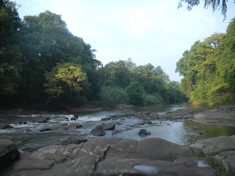 broad river with large stones and trees leaning over it