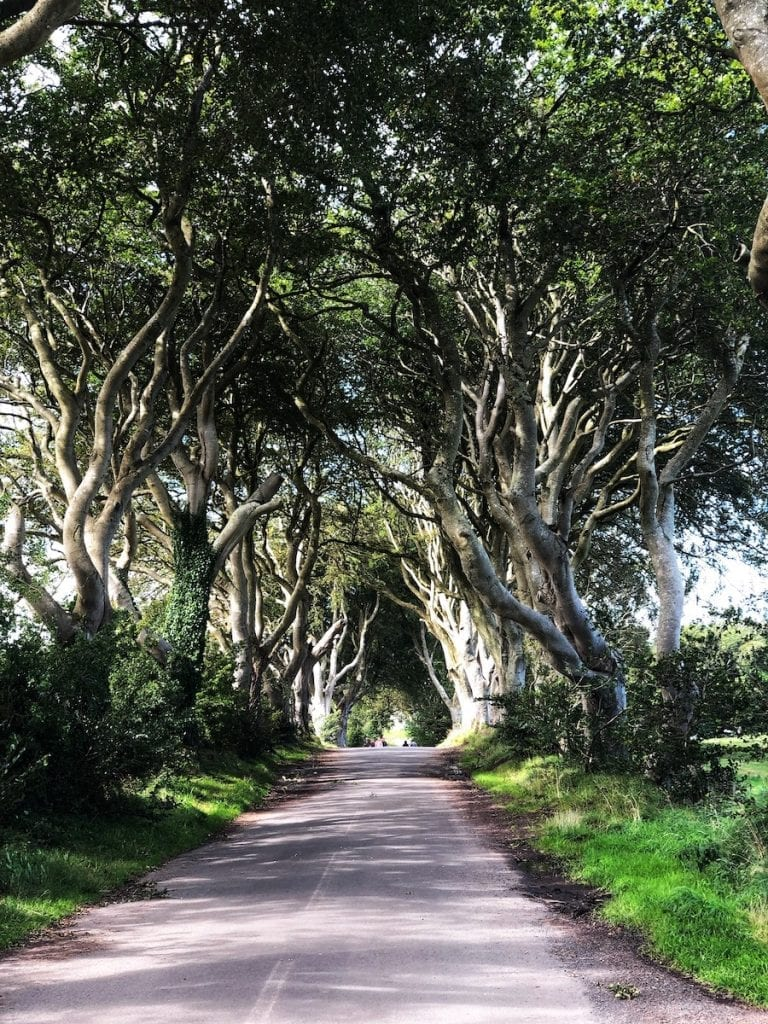 Dark hedges in Northern Ireland road with a tight tree canopy giving the effect of a tunnel through the trees on the hidden gems in Ireland