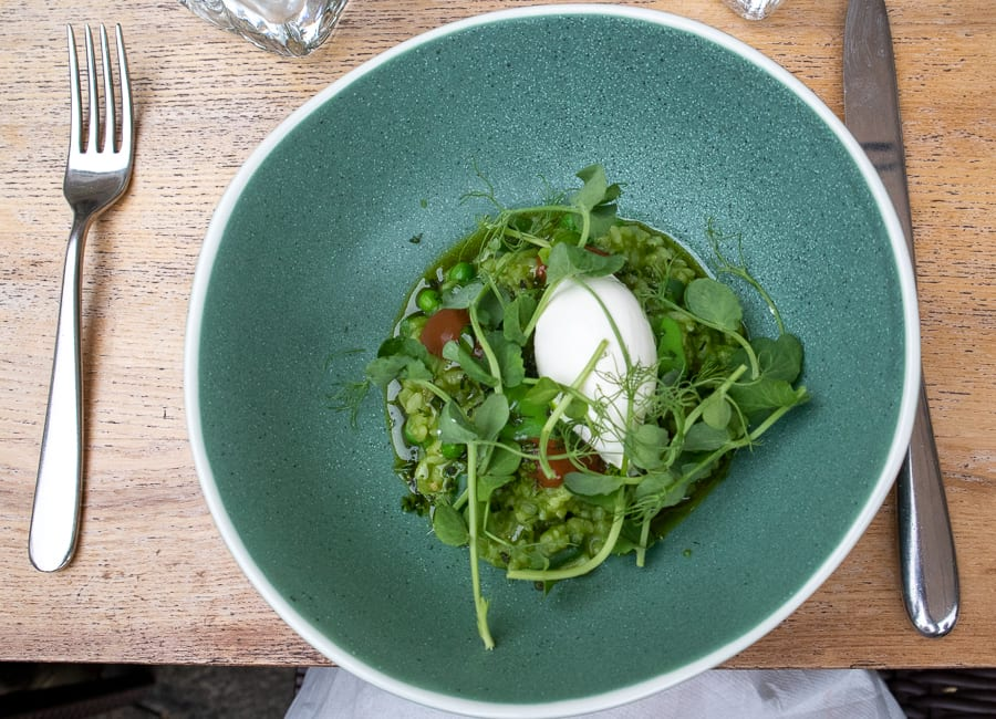 blue dish with green risotto and peashoots with peas and white mascarpone